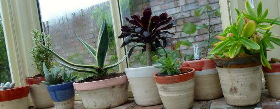 Plant pot series 2