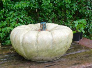 Pumpkin, 40cm x 31cm, stoneware